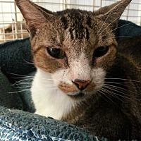 Adopt A Pet :: Clint - Margate, FL