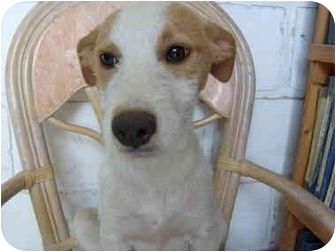 Hound (Unknown Type) Mix Puppy for adoption in Poway, California - Alma