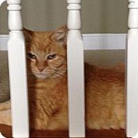 Adopt A Pet :: Goldie - Monroe, NC