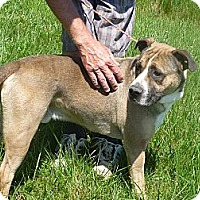 Adopt A Pet :: #179-13 ADOPTED! - Zanesville, OH