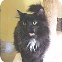 Adopt A Pet :: Snickers - Lunenburg, MA
