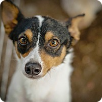 Adopt A Pet :: Lil Brother - Temecula, CA