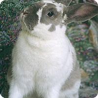 Adopt A Pet :: Collete - Santa Barbara, CA
