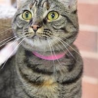 Adopt A Pet :: Tamara150236 - Atlanta, GA