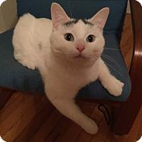 Adopt A Pet :: Yuki - Chicago, IL