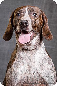 Pointer Mix Dog for adoption in Owensboro, Kentucky - DarcyDRD program