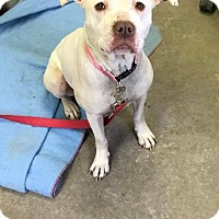 Adopt A Pet :: MINNIE - Cadiz, OH