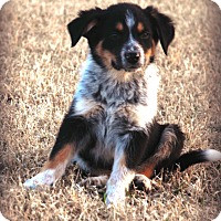 Adopt A Pet :: *Maximus - PENDING - Westport, CT