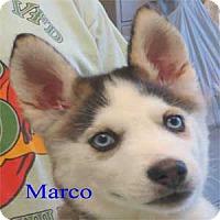 Adopt A Pet :: Marco - Warren, PA
