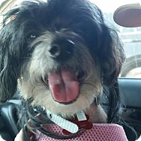 Adopt A Pet :: Wonton - San Diego, CA