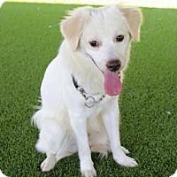 Adopt A Pet :: 'CHIP' - Agoura Hills, CA