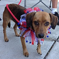 Adopt A Pet :: Bridgett-Only 14 pounds - Olive Branch, MS