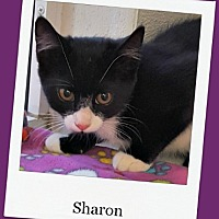 Adopt A Pet :: Sharon - Tombstone, AZ
