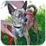 Photo 2 - Chihuahua Dog for adoption in Berkeley, California - Kalea