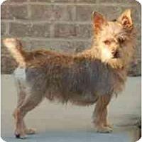 Adopt A Pet :: Henry - Charlotte, NC