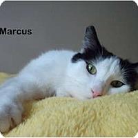 Adopt A Pet :: Marcus - Portland, OR