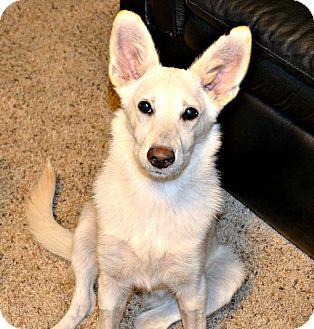 German Shepherd Dog Puppy for adoption in Dayton, Ohio - Bianca