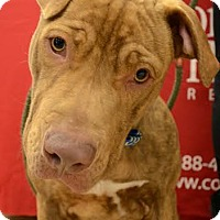 Adopt A Pet :: Java - Rockaway, NJ