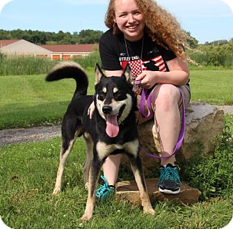 German Shepherd Dog/Husky Mix Dog for adoption in Elyria, Ohio - Huey