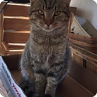 Adopt A Pet :: Tigger - Chattanooga, TN
