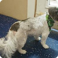 Adopt A Pet :: Marie - Rockwall, TX