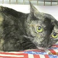 Adopt A Pet :: Puddin' - Conroe, TX