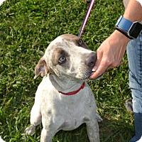 Adopt A Pet :: Mojo - Leander, TX