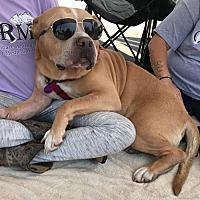 Adopt A Pet :: Jawa - Mission Viejo, CA