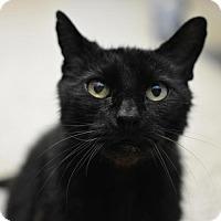Adopt A Pet :: Kiki - Scituate, MA