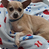 Chihuahua Mix Dog for adoption in Inland Empire, California - TANNER