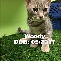 Adopt A Pet :: Woody - Chandler, AZ