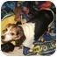 Photo 3 - Beagle/Jack Russell Terrier Mix Dog for adoption in salisbury, North Carolina - Sunshine