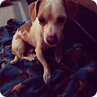 Adopt A Pet :: Rory - Chicago, IL