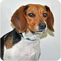 Adopt A Pet :: BB - Port Washington, NY