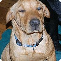 Adopt A Pet :: tike - cameron, MO