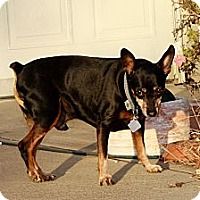 Adopt A Pet :: Beau - Topeka, KS