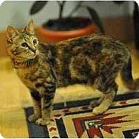 Adopt A Pet :: Nott - Portland, OR