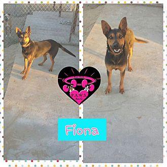 German Shepherd Dog Mix Dog for adoption in Fowler, California - Fiona
