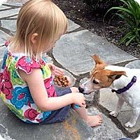 Adopt A Pet :: Munchie - Rhinebeck, NY