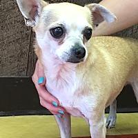 Adopt A Pet :: *URGENT* Rocco - Van Nuys, CA