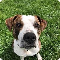 Adopt A Pet :: Hektor - Emmett, MI