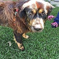 Adopt A Pet :: Handy - McKinney, TX