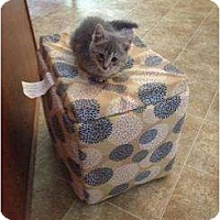 Adopt A Pet :: Jupiter - Mobile, AL