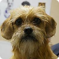 Adopt A Pet :: Tabitha - Charlotte, NC