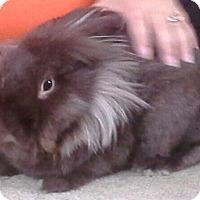 Adopt A Pet :: Growly - Maple Shade, NJ