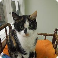 Adopt A Pet :: Mystery - Medina, OH