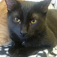 Adopt A Pet :: Bear - Lenhartsville, PA