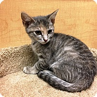 Adopt A Pet :: Sugar - Riverside, CA
