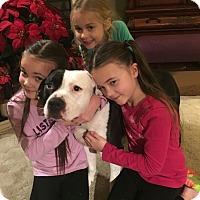 Adopt A Pet :: Dozer, loves children! - Sacramento, CA