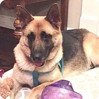 Adopt A Pet :: Dixie - Kansas City, MO